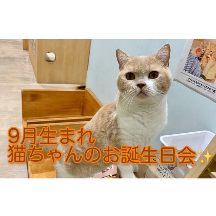 猫ちゃんのお誕生日会♪