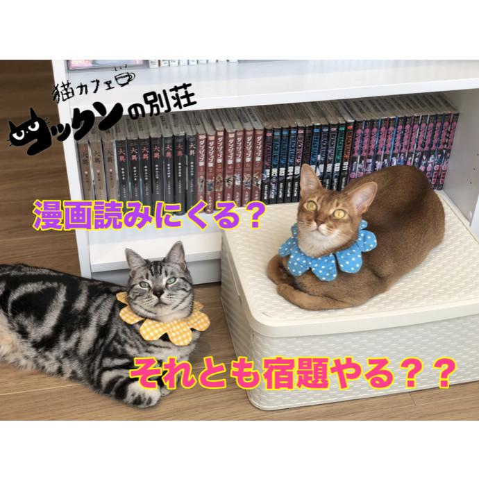 夏休み♡猫カフェコックンの別荘に遊びに行こう!