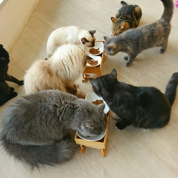 ネコちゃんのご飯イベント!