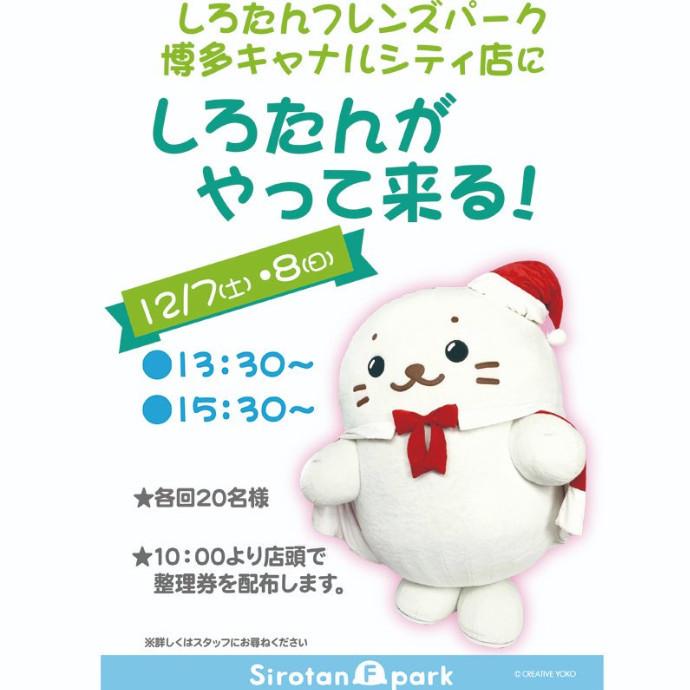*原宿・大阪限定商品、販売決定!しろたんグリーティング♪*