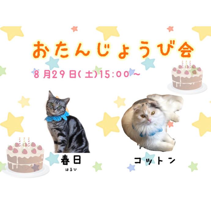 ♪猫ちゃんのお誕生日会♪