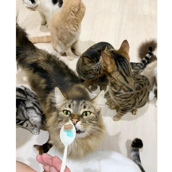 猫ちゃんたちに埋もれる⁉️