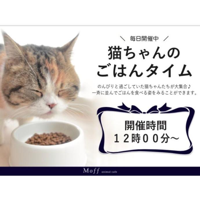 猫ちゃんのご飯タイム🍚