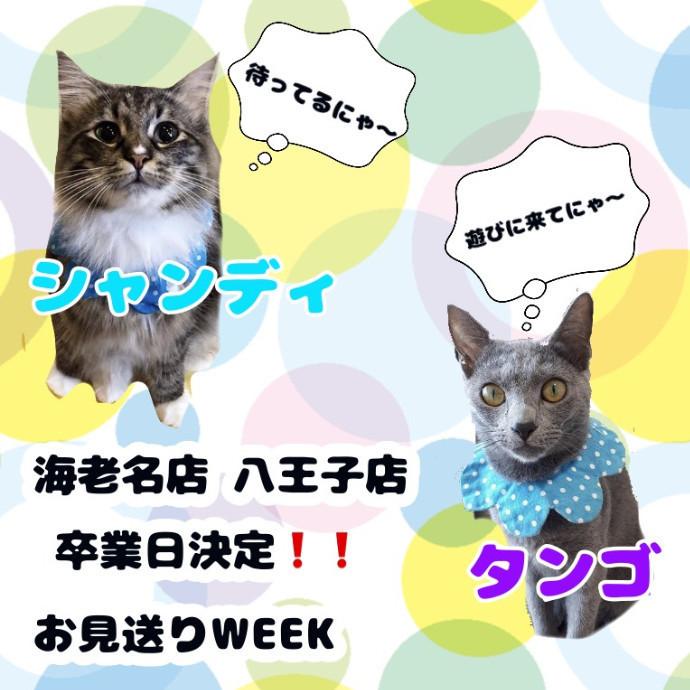 ★猫ちゃんのお引越し★お見送りweek