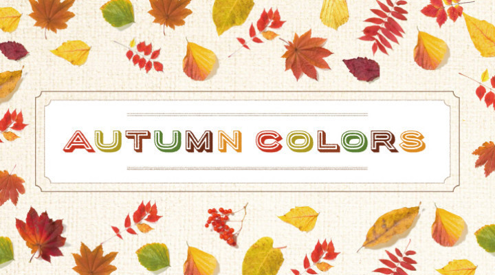 Autumn Collection&Item